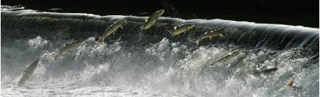 salmonsequence